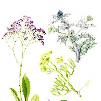 Flora in the Garden at Ventnor Botanic Garden