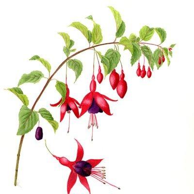 Ventnot Botanical Artists at Quarr Abbey