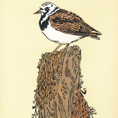 Annual exhibition of the Society of Wildlife Artists